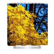 October Blues 10 - Square Shower Curtain by Alexander Senin