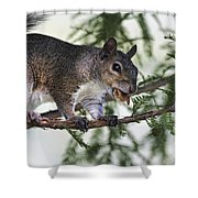 Ok You Caught Me Shower Curtain by Deborah Benoit