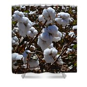 Old Cotton Fields Back Home Shower Curtain by Beverly Guilliams