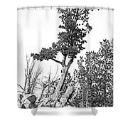 Old Gnarly Tree Shower Curtain by Edward Fielding