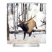 On The Move Shower Curtain by Mike  Dawson