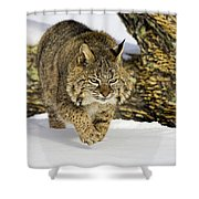 On The Prowl Shower Curtain by Jack Milchanowski