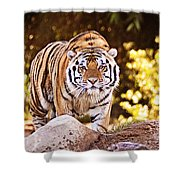 On The Prowl Shower Curtain by Scott Pellegrin