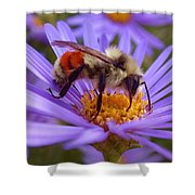 Orange-banded Bee Shower Curtain by Rona Black