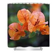 Orange Bougainvillea Shower Curtain by Rona Black