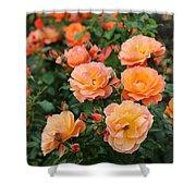Orange Roses Shower Curtain by Carol Groenen