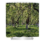 Orchard Shower Curtain by Anonymous