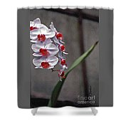 Orchid In Window Shower Curtain by Linda  Parker