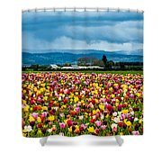 Oregon Tulip Farm - Willamette Valley Shower Curtain by Gary Whitton