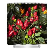 Ornamental Peppers Shower Curtain by Peter French