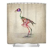 Osteology Of Birds Shower Curtain by Aged Pixel
