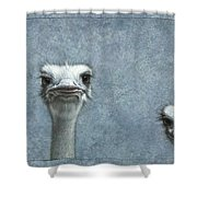 Ostriches Shower Curtain by James W Johnson