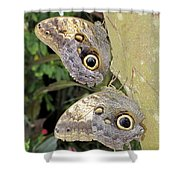 Owl Butterflies Shower Curtain by Bob Slitzan