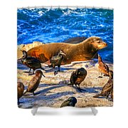 Pacific Harbor Seal Shower Curtain by Jim Carrell