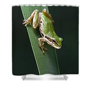 Pacific Tree Frog Pseudacris Regilla Shower Curtain by Jack Goldfarb