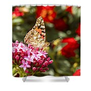 Painted Lady Butterfly Shower Curtain by Eyal Bartov