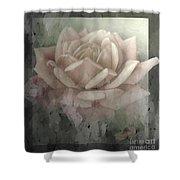 Pale Rose Photoart Shower Curtain by Debbie Portwood