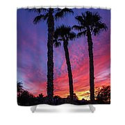 Palm Trees Sunset Shower Curtain by Robert Bales