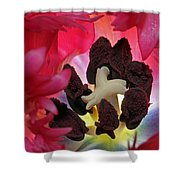 Parrot Tulip Swirl Shower Curtain by Juergen Roth
