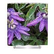Passion Vine Flower Rain Drops Shower Curtain by Rich Franco