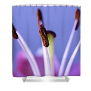 Pastels and Chocolate Shower Curtain by Christi Kraft