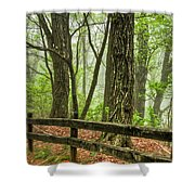 Path into the Forest Shower Curtain by Debra and Dave Vanderlaan
