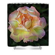 Peace Rose Shower Curtain by Sandy Keeton