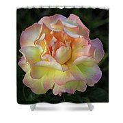 Peace Rose Shower Curtain by Sandy Keeton