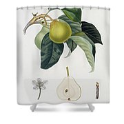 Pear Shower Curtain by Pierre Antoine Poiteau