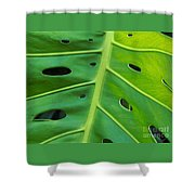 Peekaboo Leaf Shower Curtain by Ann Horn