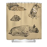 Peke, Collie, Spaniel And German Boxer Shower Curtain by Cecil Charles Windsor Aldin