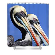 Pelican Perfection Shower Curtain by James Brunker