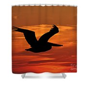 Pelican Profile Shower Curtain by Al Powell Photography USA