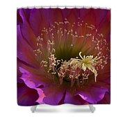 Perfectly Pink Shower Curtain by Saija  Lehtonen