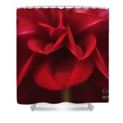 Petals Shower Curtain by Cheryl Young