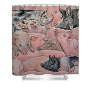 Pig Spread Shower Curtain by Ditz