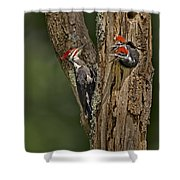 Pilated Woodpecker Family Shower Curtain by Susan Candelario