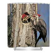 Pileated Woodpecker And Chick Shower Curtain by Susan Candelario
