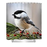 Pine Chickadee Shower Curtain by Christina Rollo