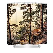 Pine Trees Of Holy Island Shower Curtain by Jenny Rainbow