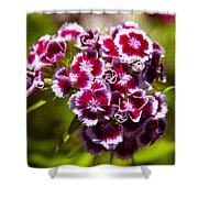 Pink And White Carnations Shower Curtain by Omaste Witkowski