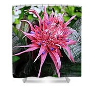 Pink Bromeliad Shower Curtain by Andee Design