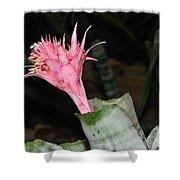 Pink Bromeliad Bloom Shower Curtain by Kaye Menner