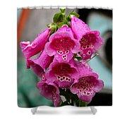Pink Foxglove Shower Curtain by Karon Melillo DeVega