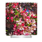 Pink Magnolia 2 Shower Curtain by Joann Vitali