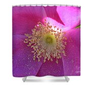 Pink Ocean Wildflower Shower Curtain by Neal  Eslinger