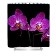 Pink Orchid  Shower Curtain by Toppart Sweden