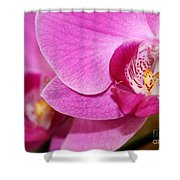Pink Orchids Shower Curtain by Sabrina L Ryan