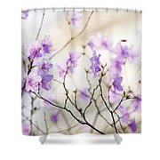 Pink Rhododendron In Spring Shower Curtain by Elena Elisseeva