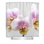 Pink Sensation Shower Curtain by Juergen Roth
